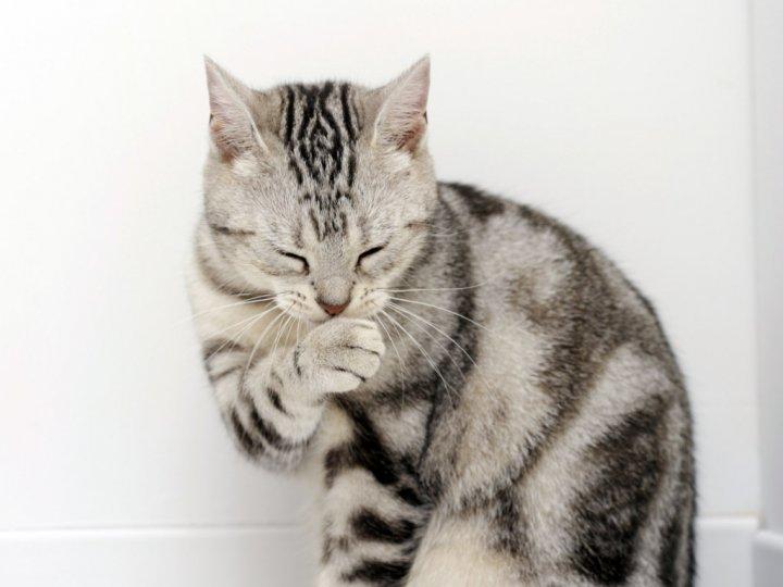 У кошки 100 кгц глисты у кошки фото