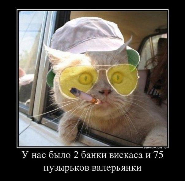 http://anekdotikov.net/pic/fotoprikol/1695.jpg